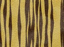 Zwierzęcy futerkowy tygrys zdjęcie royalty free