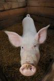 Zwierzęcy gospodarstwo rolne fotografia stock