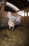 Zwierzęcy gospodarstwo rolne zdjęcie royalty free