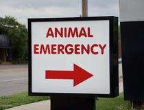 Zwierzęcy nagłego wypadku i zwierzęcia domowego szpital zdjęcie royalty free