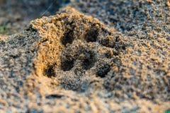 Zwierzęcy odcisk stopy na piaska zakończeniu fotografia stock