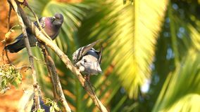 Zwierzęcy ptaków gołębie na drzewie zbiory