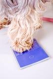 Zwierzęcy zwierzę domowe paszport Zdjęcia Royalty Free