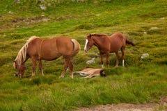 zwierzęcych postać z kreskówki rodzinni śmieszni konie odizolowywali Zdjęcia Royalty Free