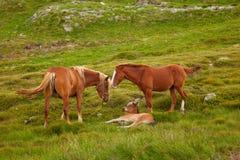 zwierzęcych postać z kreskówki rodzinni śmieszni konie odizolowywali Obraz Royalty Free