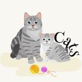 Zwierzęta domowe matkują kota i figlarki siedzi białego tło, zwierze domowy Zdjęcie Royalty Free