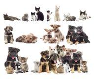 zwierzęta domowe ustawiają Obrazy Royalty Free