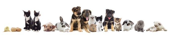 zwierzęta domowe ustawiają Zdjęcia Royalty Free