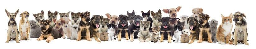 zwierzęta domowe ustawiają Zdjęcie Stock