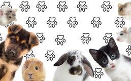 zwierzęta domowe ustawiają Obraz Royalty Free