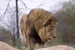 zwierzęta dzicy Fotografia Royalty Free