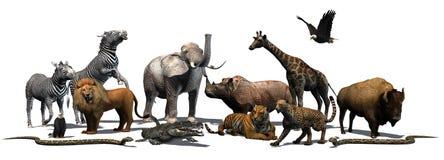 Zwierzęta Dziki - odizolowywający na białym tle Obraz Stock