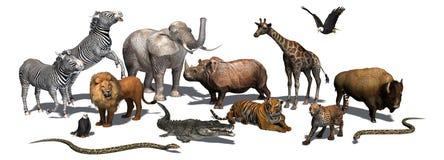 Zwierzęta Dziki - odizolowywający na białym tle Obrazy Stock