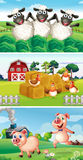 Zwierzęta gospodarskie żyje w farmyard Fotografia Stock