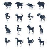 Zwierzęta gospodarskie ustawiają czerń Fotografia Stock