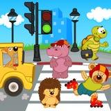 Zwierzęta iść przez crosswalk Obrazy Stock