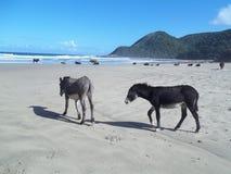 Zwierzęta i plaże Południowa Afryka Zdjęcia Stock