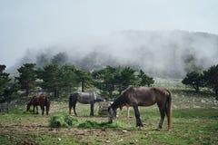Zwierzęta, konie pasają w łące w górach, natura Fotografia Royalty Free