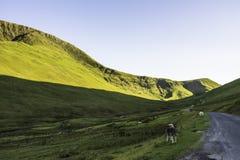 Zwierzęta na wiejskiej drodze w scenicznej halnej dolinie, UK fotografia stock