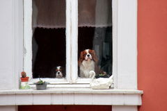 Śliczni psy przy okno Zdjęcie Royalty Free