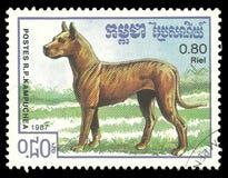 Zwierzęta, psy, Niemiecki mastif fotografia royalty free