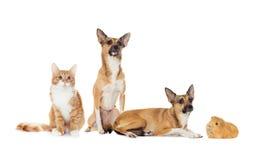 zwierzęta ustawiający Zdjęcia Stock
