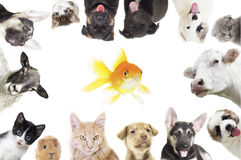 zwierzęta ustawiający Fotografia Stock
