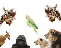 zwierzęta ustawiający Zdjęcia Royalty Free