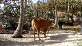 Zwierzęta w kokosowym gaju morzem zdjęcie wideo