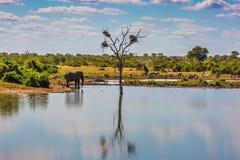Zwierzęta w Południowa Afryka Fotografia Royalty Free