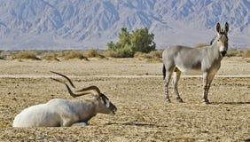 zwierzęta zakazują hai Israel rezerwat przyrody Zdjęcia Stock