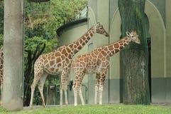Zwierzę Obraz Royalty Free