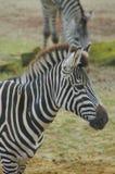 zwierzę Fotografia Royalty Free