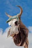 Zwierzęca czaszka Zdjęcia Royalty Free