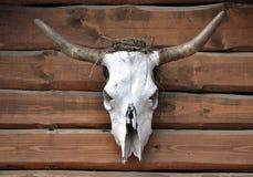 Zwierzęca czaszka Zdjęcie Stock
