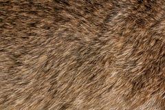 Zwierzęca futerkowa tekstura Fotografia Stock