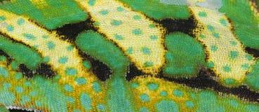 zwierzęca kameleonu gada skóra Obrazy Royalty Free