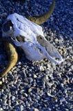 Zwierzęce czaszki z rogami w pustyni Zdjęcia Stock