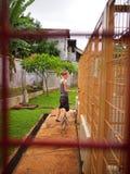 zwierzęcego schronienia target301_0_ Zdjęcie Royalty Free