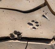 Zwierzęcej stopy druk Fotografia Stock