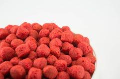 Zwierzęcia domowego jedzenie Zdjęcie Royalty Free
