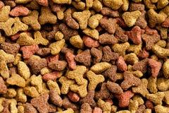 Zwierzęcia domowego jedzenie Zdjęcie Stock