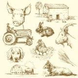 zwierzęcia gospodarstwo rolne Obraz Royalty Free