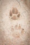 Zwierzęcy odcisk stopy Zdjęcia Stock