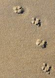 zwierzęcy odciski stopy Zdjęcia Stock