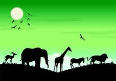 zwierzęcy safari Zdjęcia Royalty Free