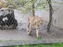 Zwierzęcy zoo Obrazy Royalty Free