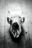 Zwierzę czaszka Zdjęcie Royalty Free