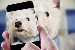 Zwierzę domowe fotografia Zdjęcia Stock