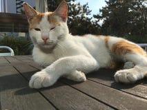Zwierzę domowe kotów backround Zdjęcie Stock